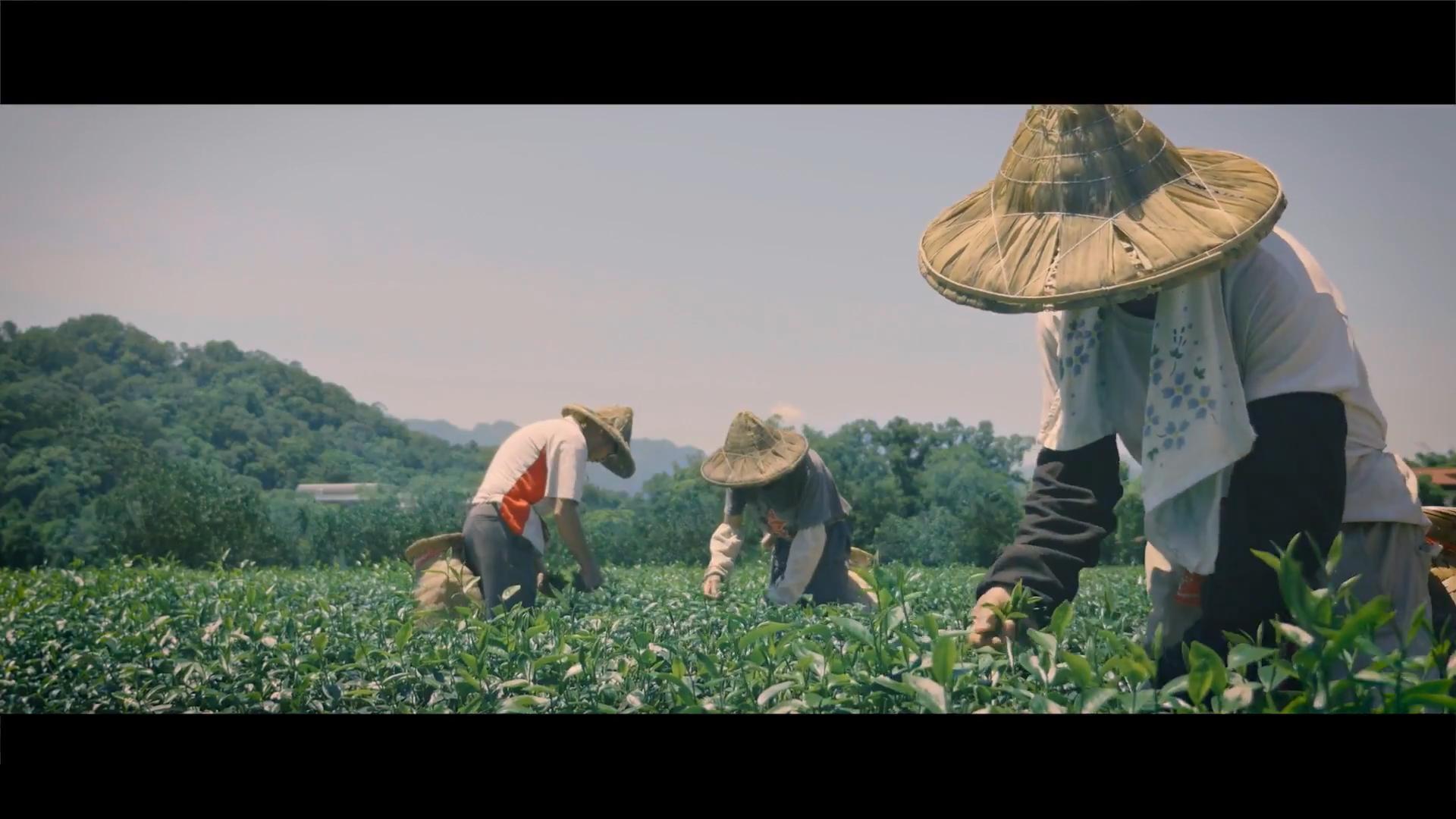大苑子 品苑茶產品形象廣告