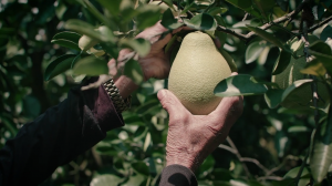 品牌形象塑造:農業不是一代人的事│大苑子、果真新鮮